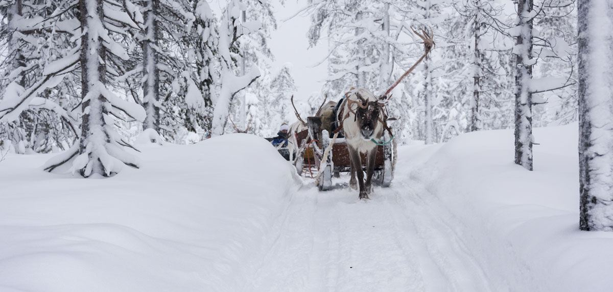 reindeer sleigh lapland