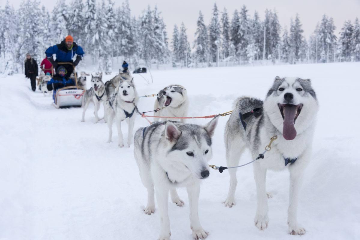 salla finland dogsledding