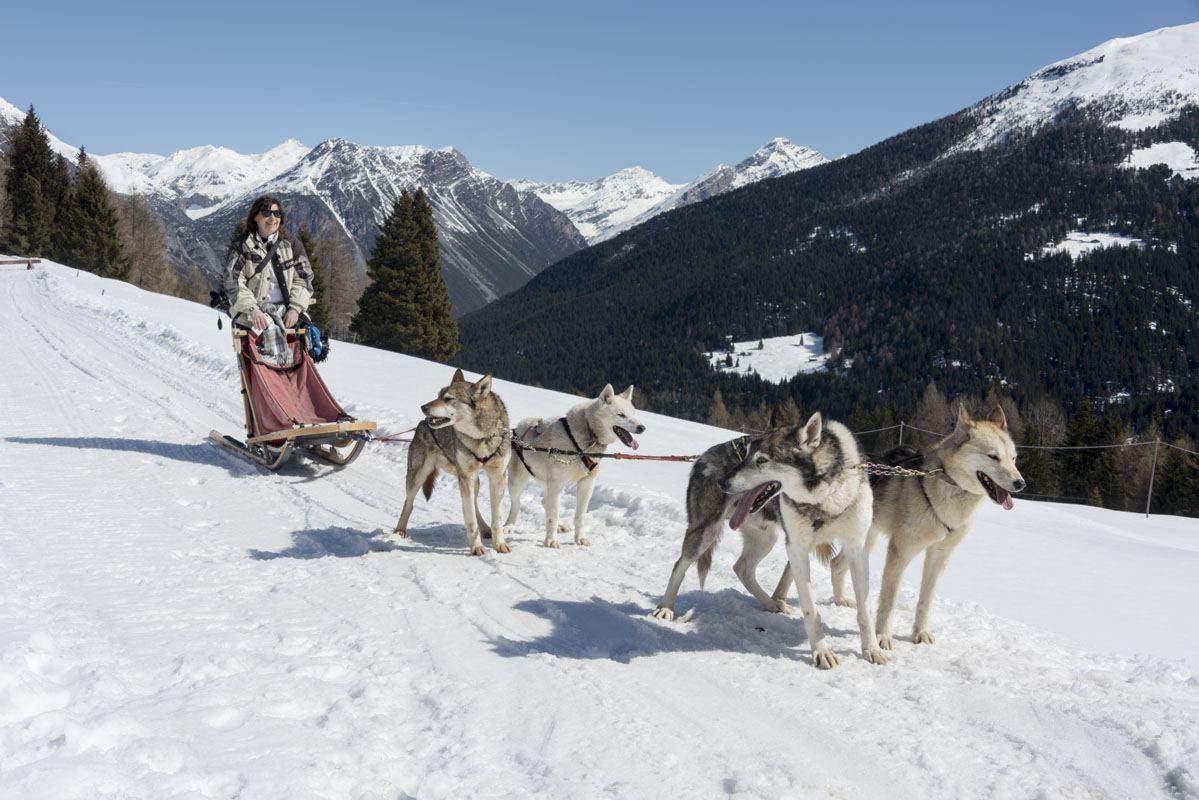 arnoga husky village dogsledding
