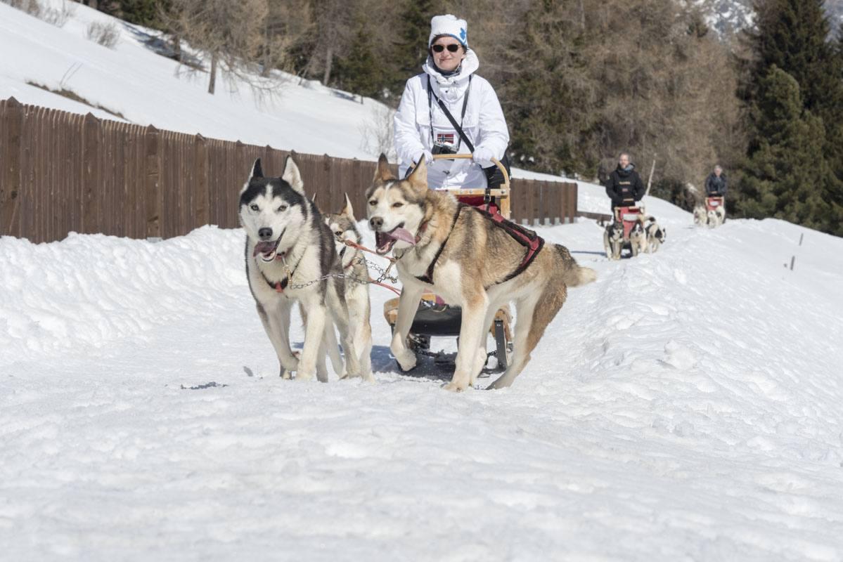Valtellina dogsled running