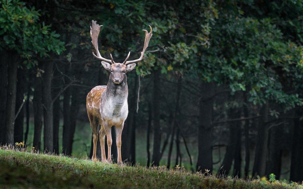 deer conservation park ciwidey