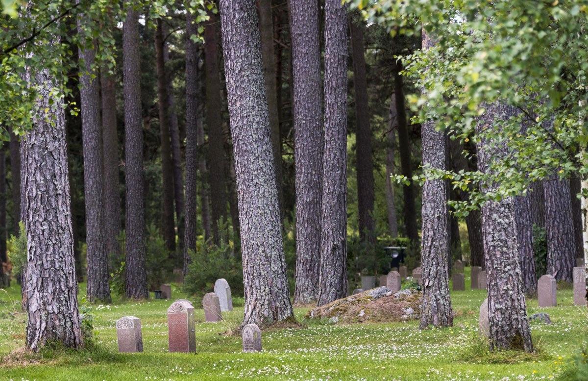 Skogskyrkogarden cemetery trees