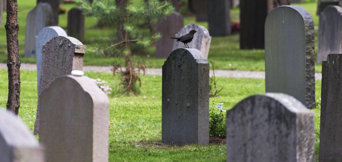 Skogskyrkogarden graves close up
