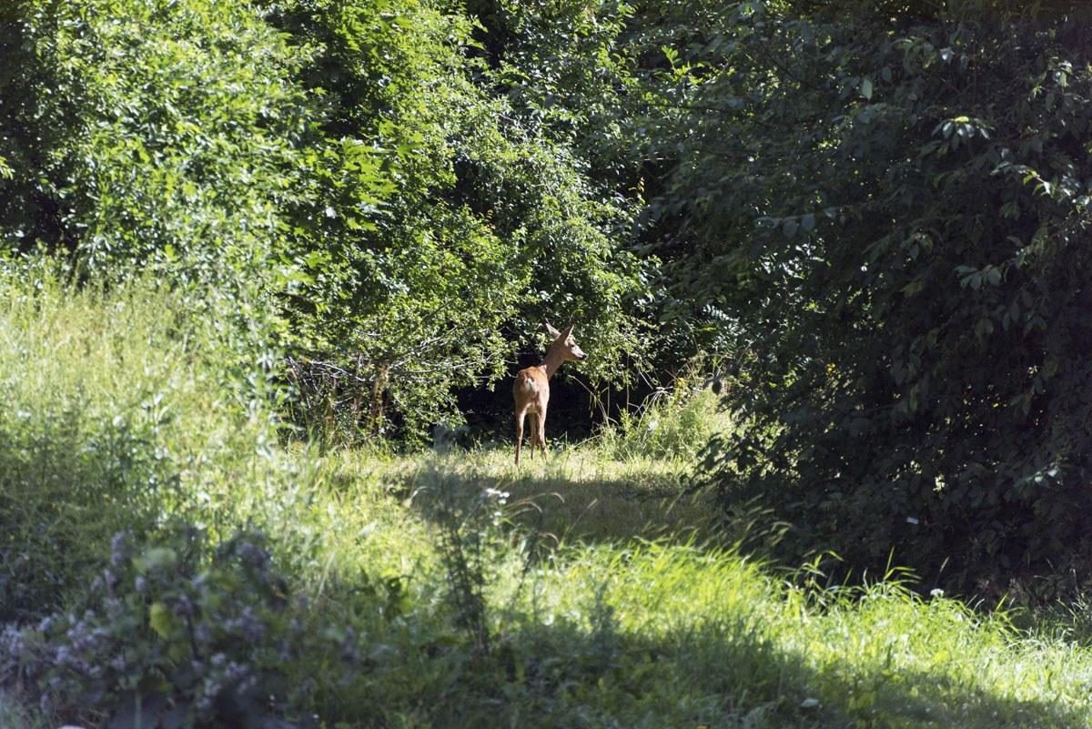 eco village stockholm deer