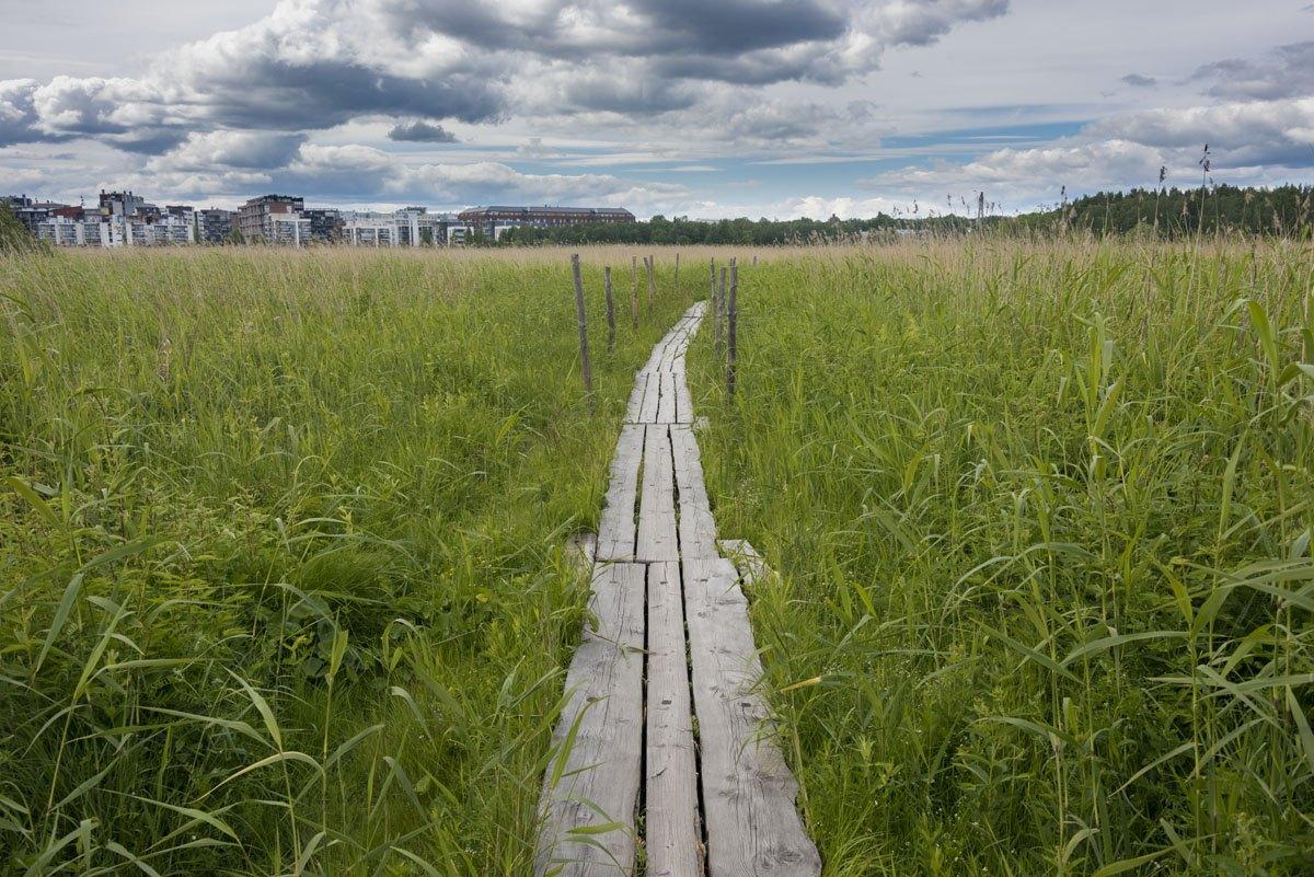 lammasaari log paths