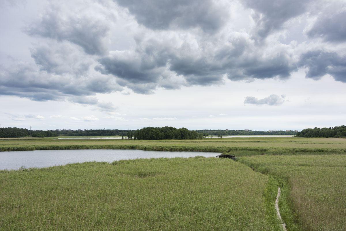 lammasaari swamps