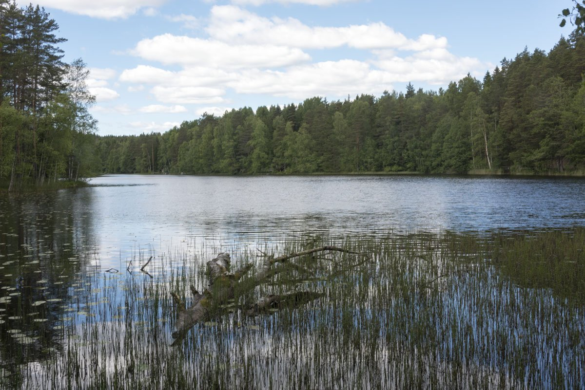 nuuksio lake branch