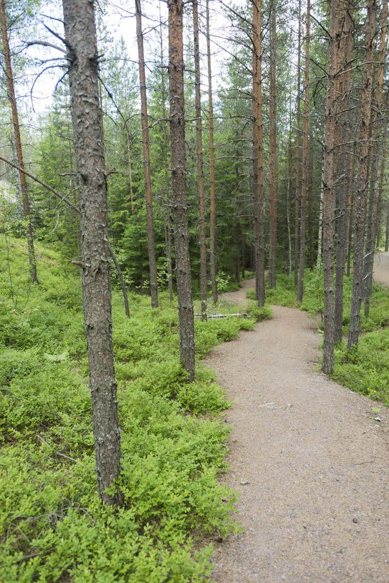 nuuksio squiggly path