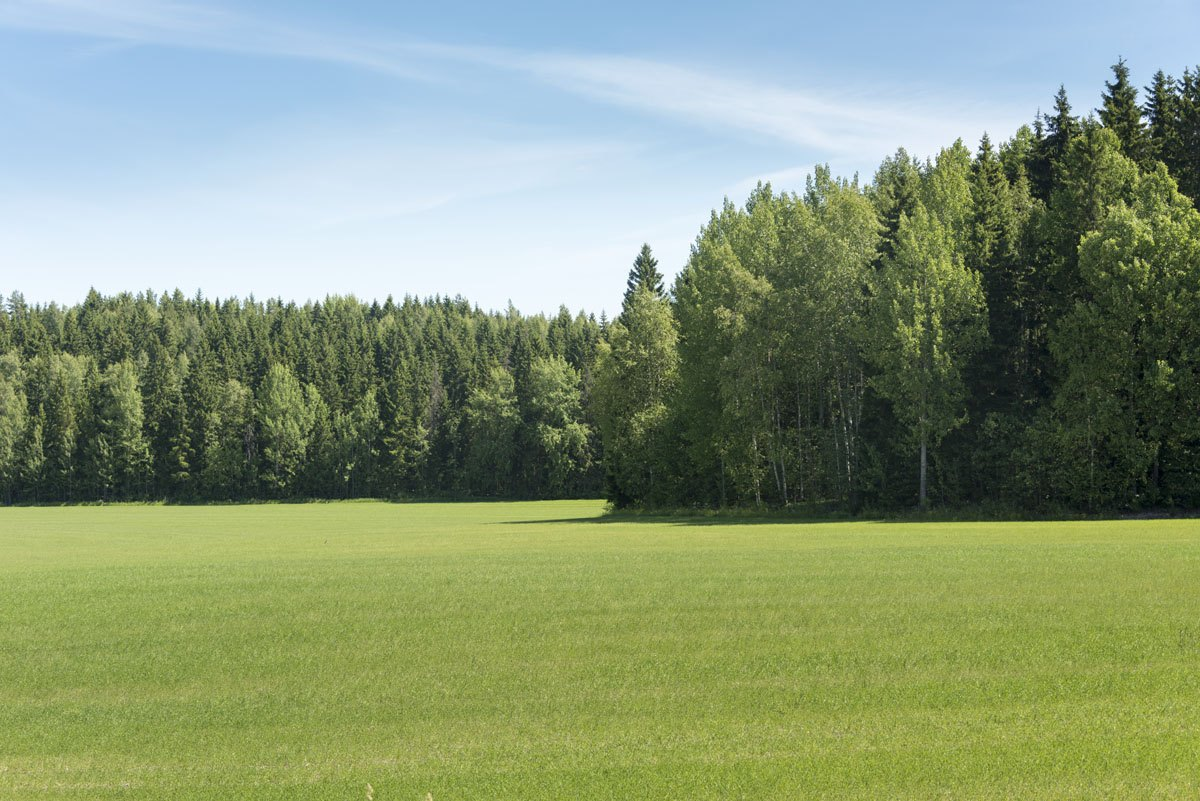 vihti finland green meadow