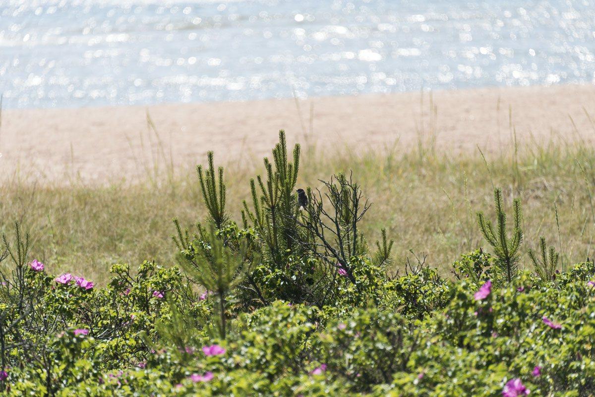 sea-summer-hanko-finland
