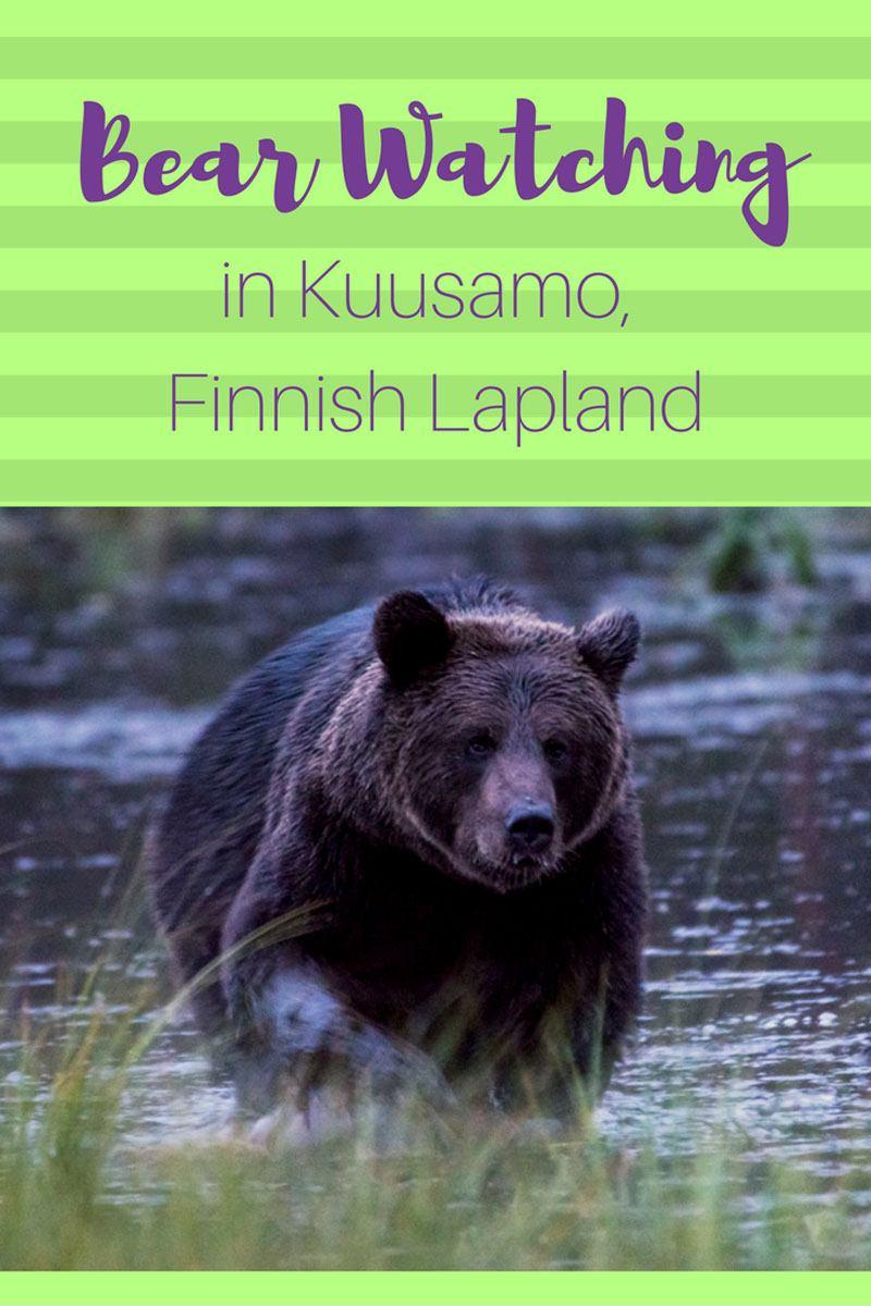 bear-pin-kuusamo