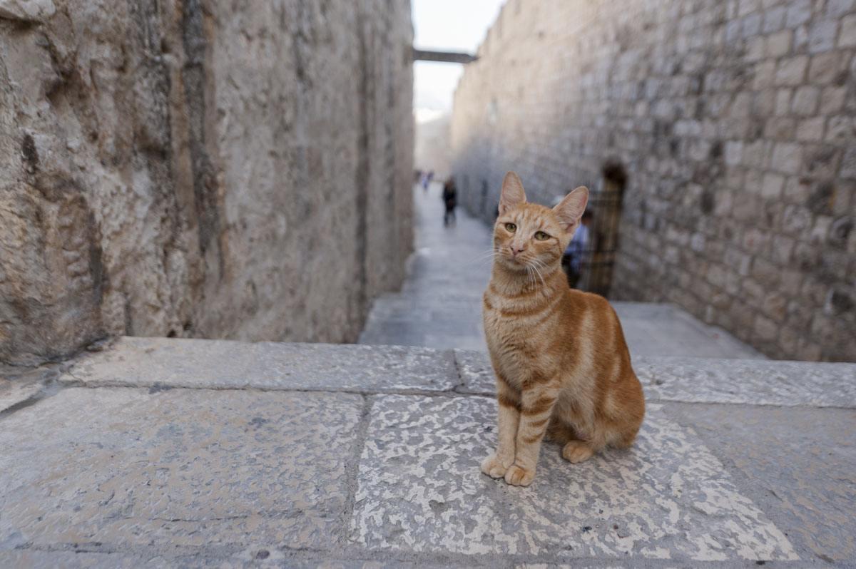 dubrovnik-cat