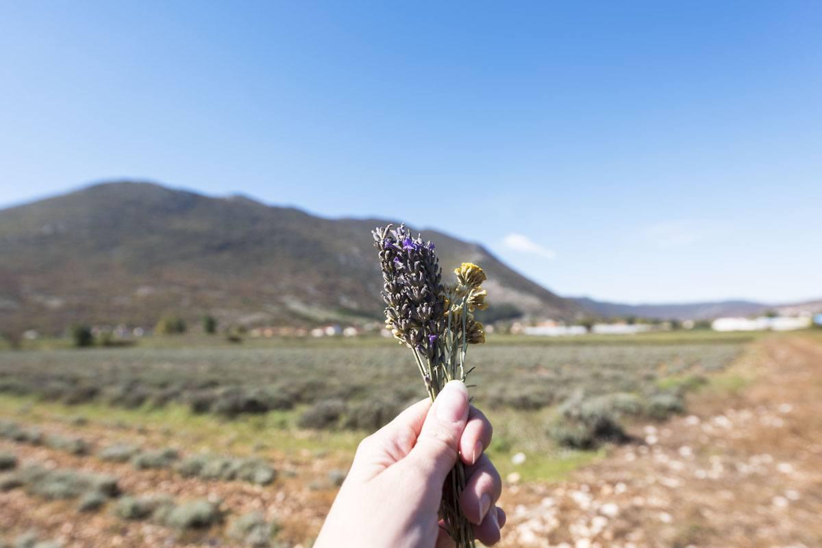 herzegovina-wild-herbs