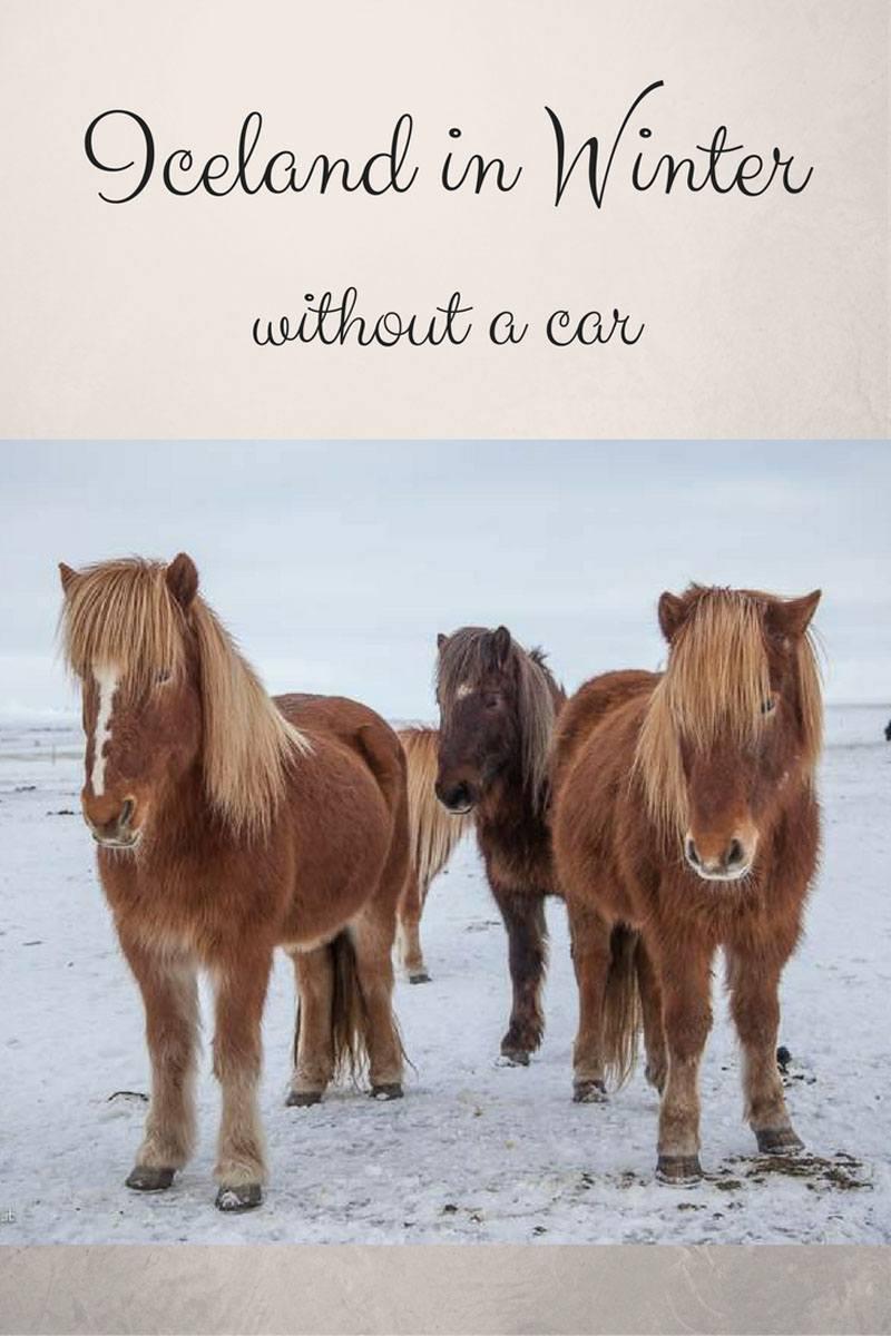 icelandic-horses-pin