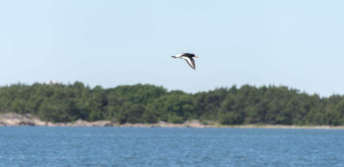 jurmo-aland-islands-summer