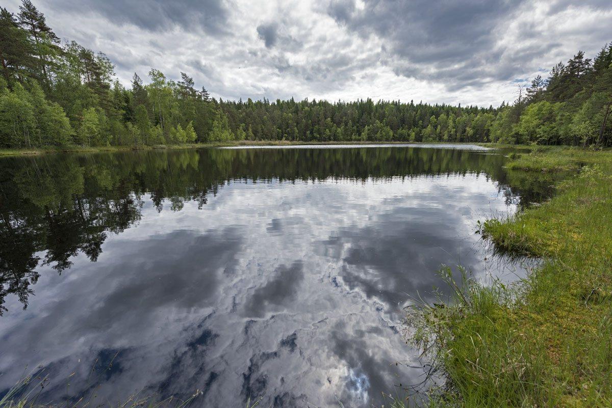 lake katrontrask trees