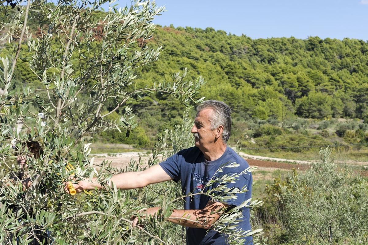 sipan-croatia-miho-bender-olives
