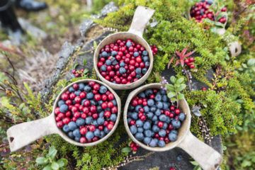 stopover-in-finland-kuusamo-berry-picking