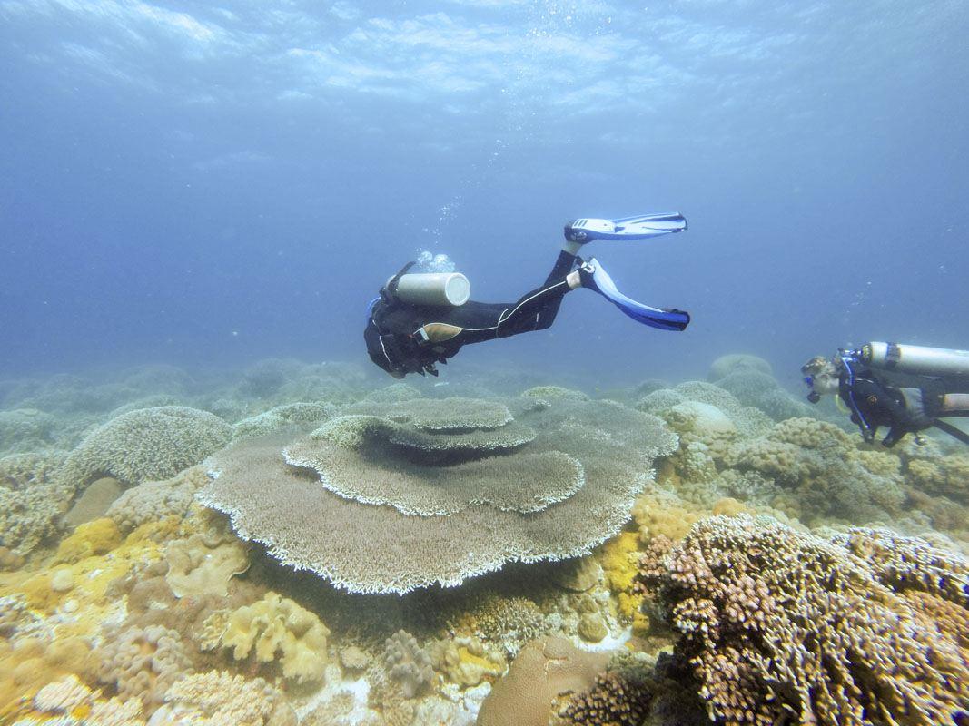 malapascua philippines diver reef