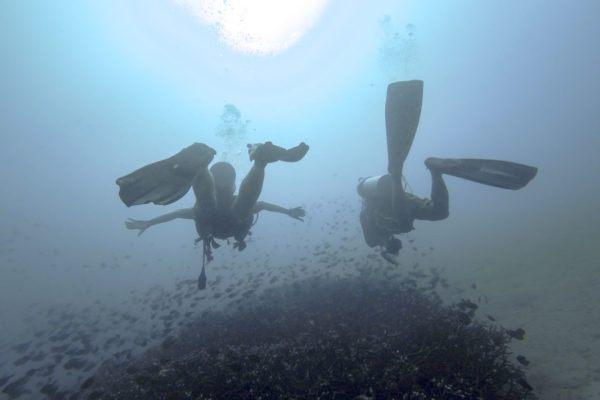 malapascua philippines diving