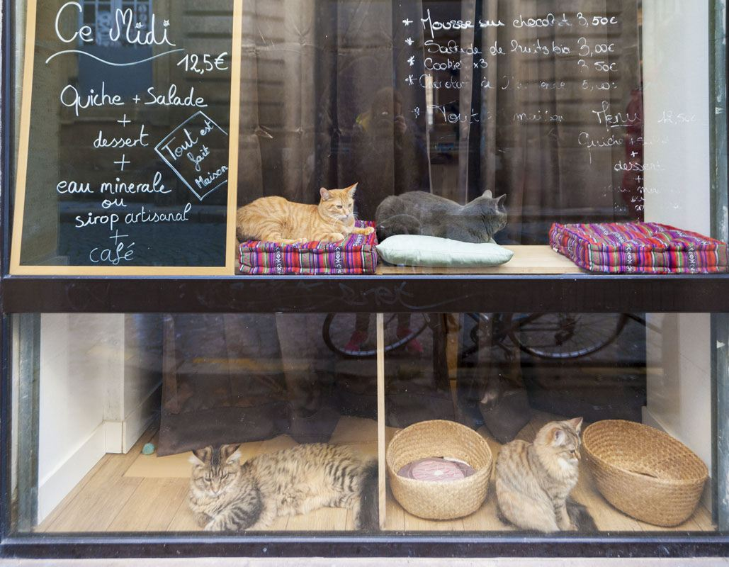 bordeaux cat cafe le comptoir des chats window