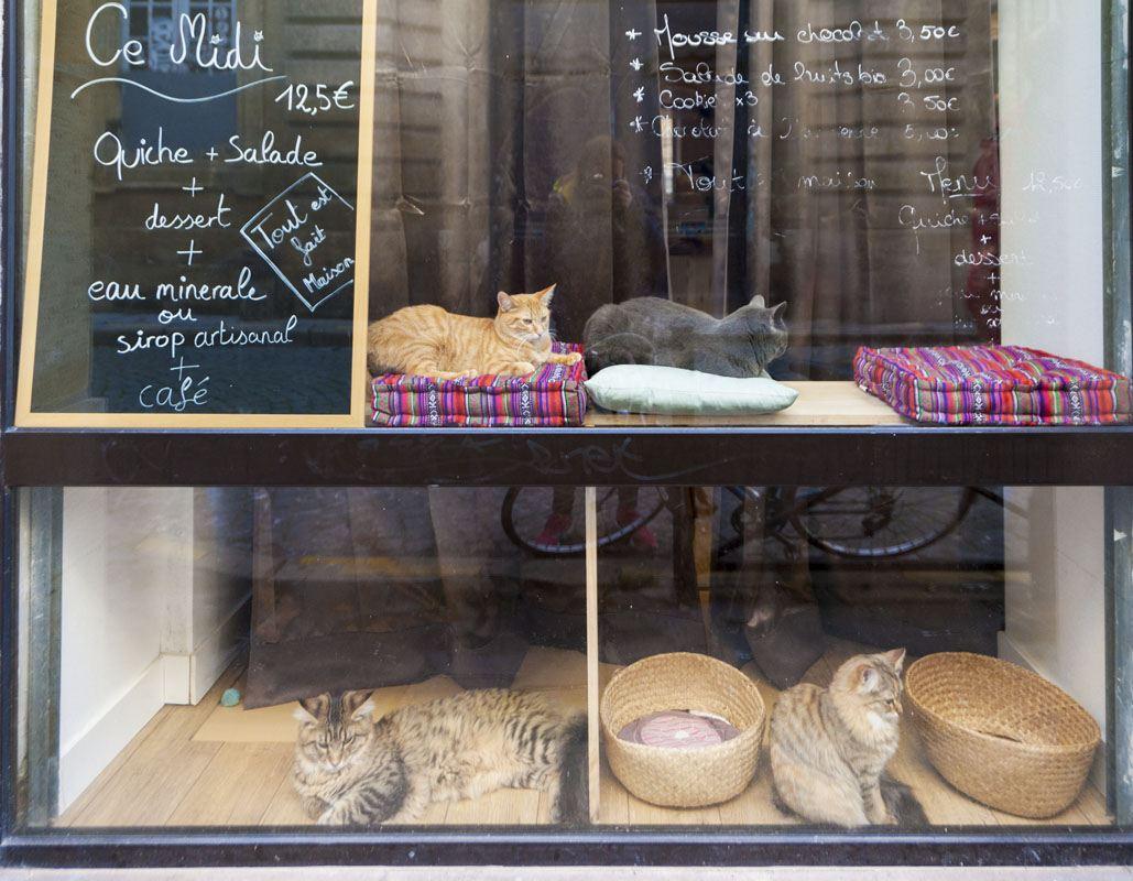 bordeaux cat cafe le comptoir des chats window