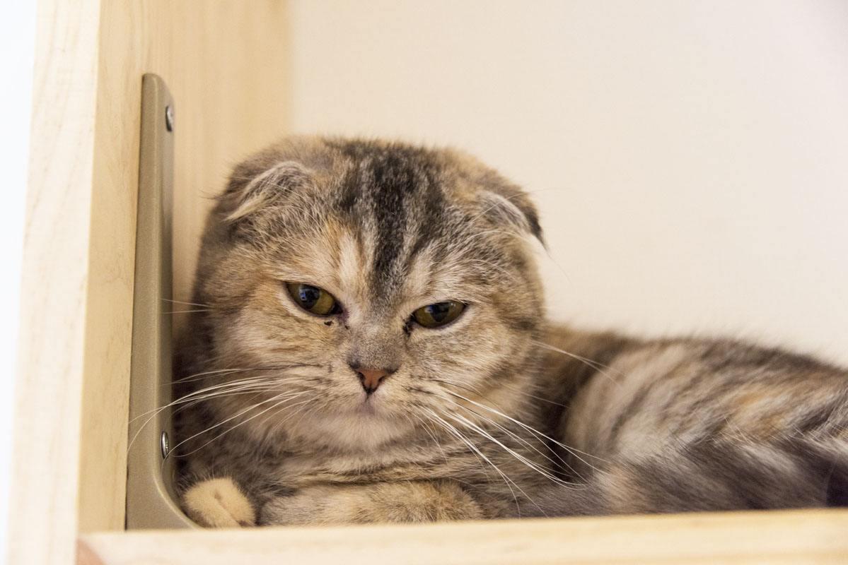 bordeaux cat cafe le comptoir des chats