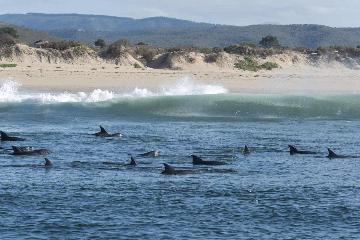 things to do in plettenberg bay dolphins