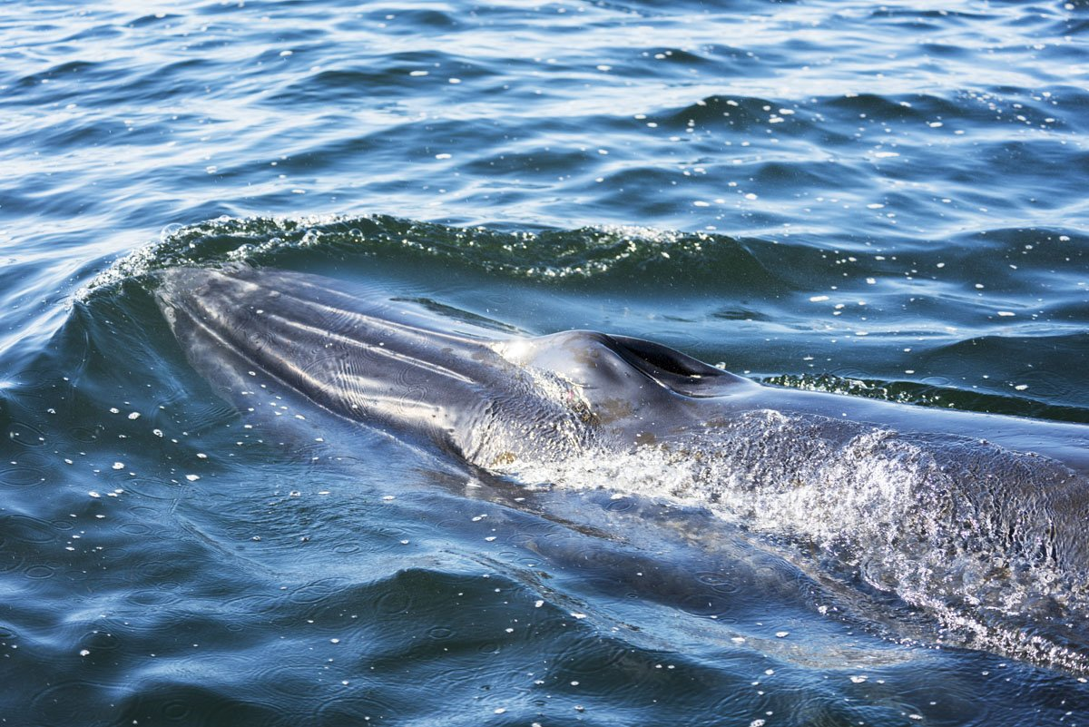 things to do in plettenberg bay whale watching