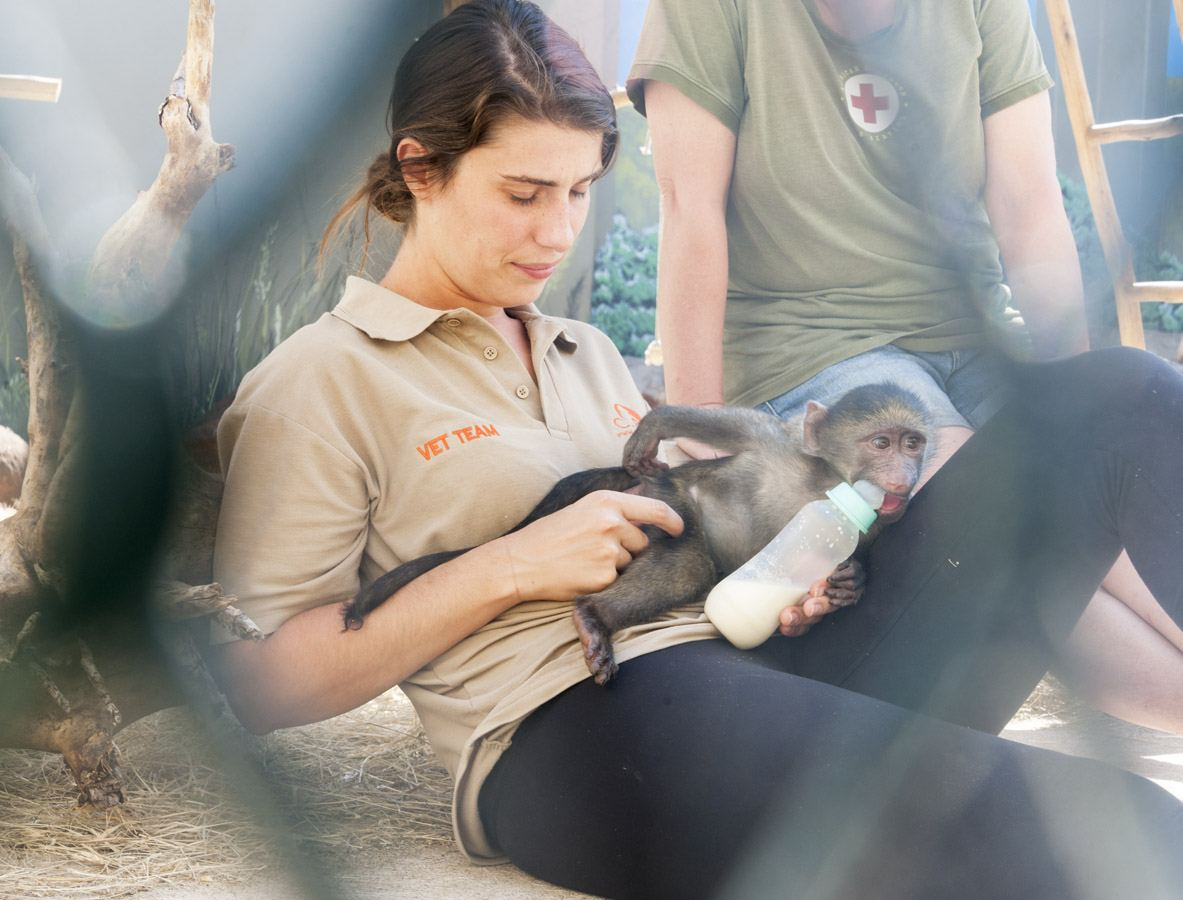 care baboons baby feeding