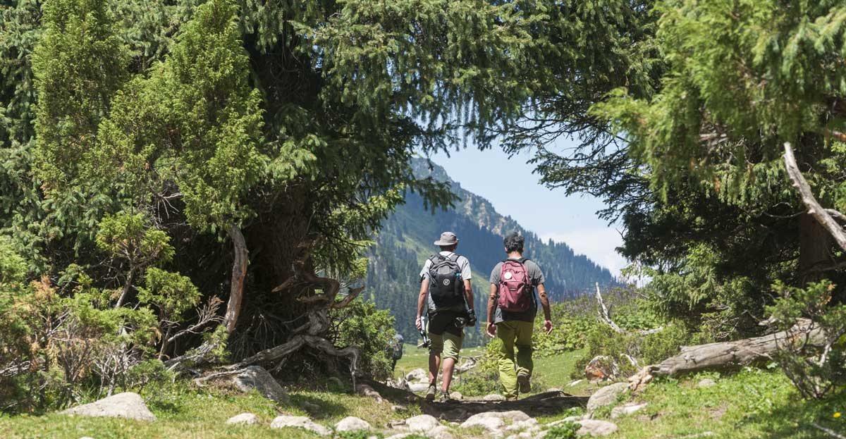 hiking kyrgyzstan under trees