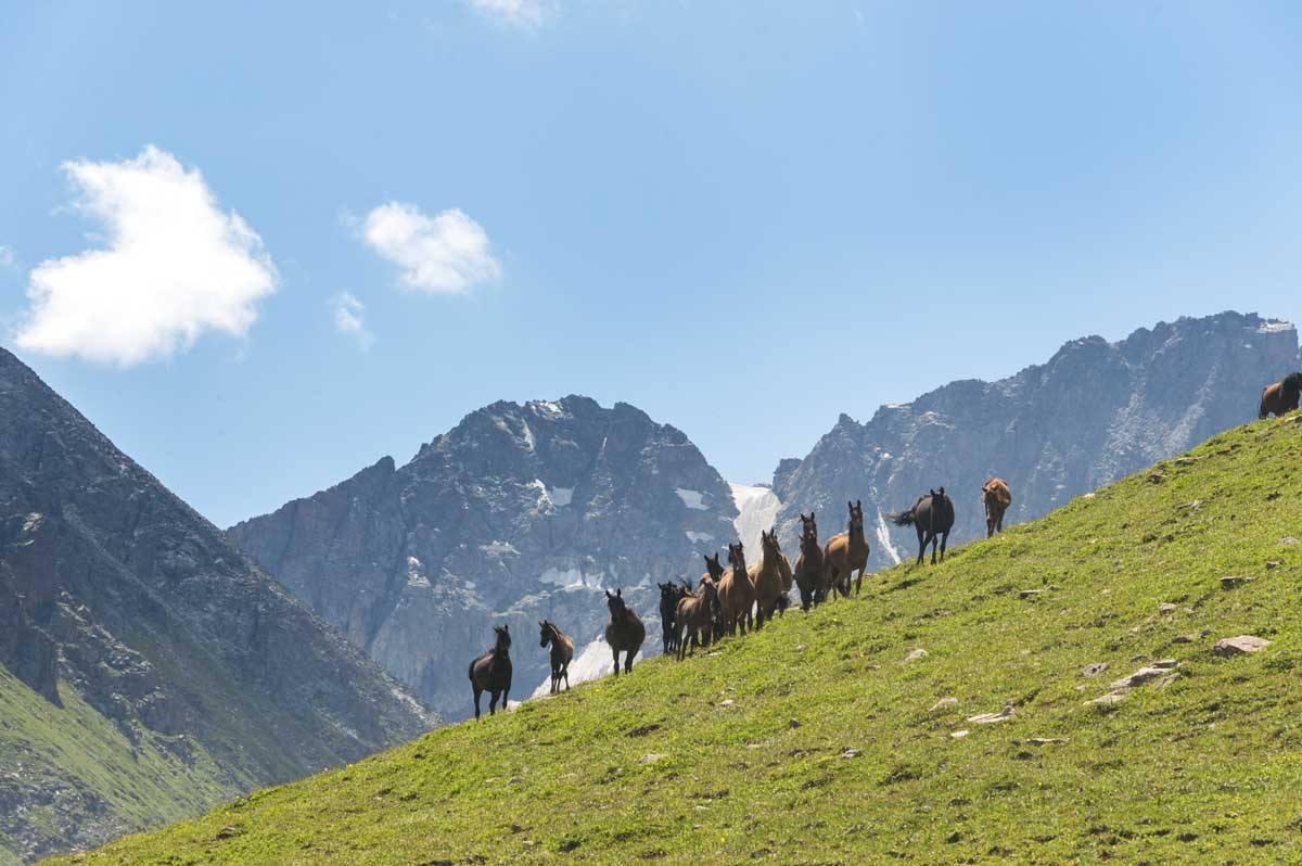 kyrgyzstan horses mountainside