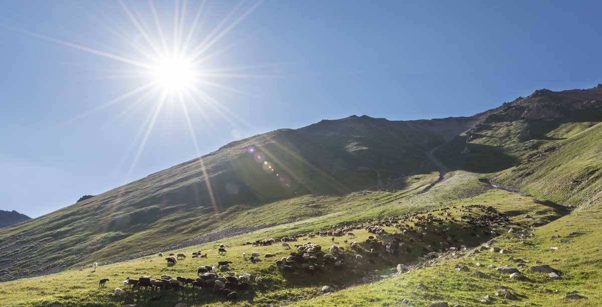 kyrgyzstan sheep mountain