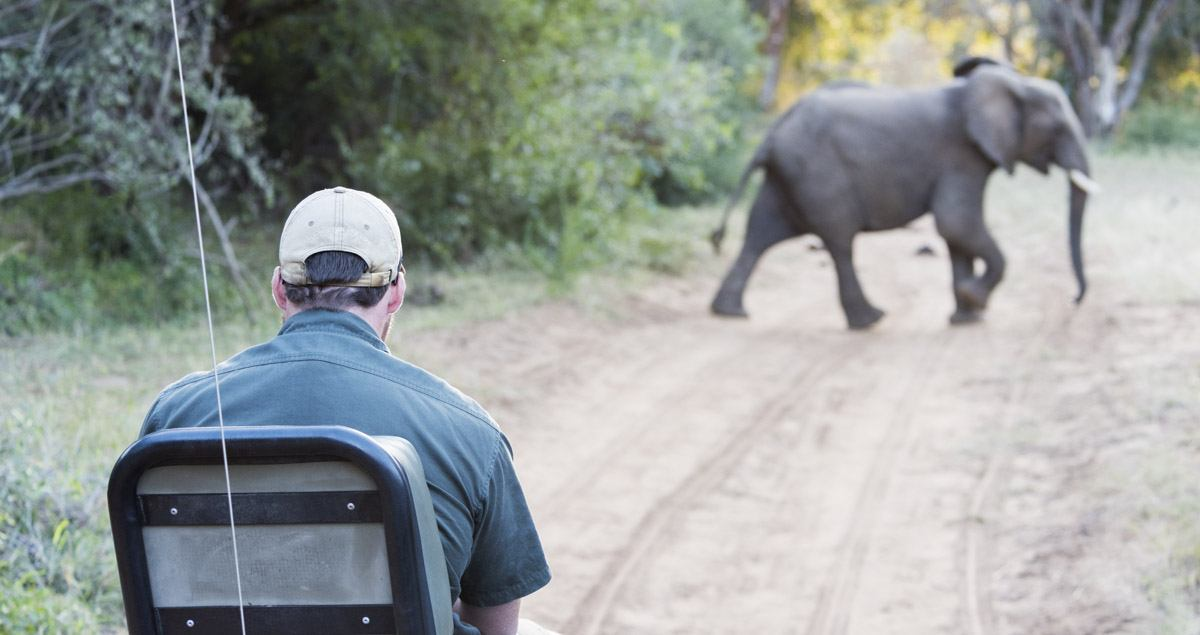 rukiya game drive elephant
