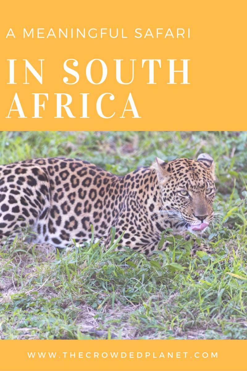 south africa safari pin 1