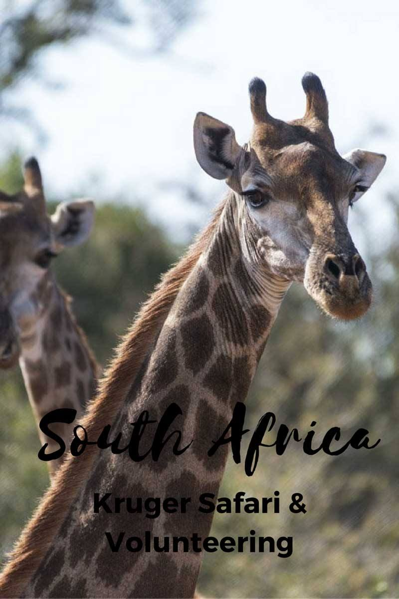 south africa safari pin 3