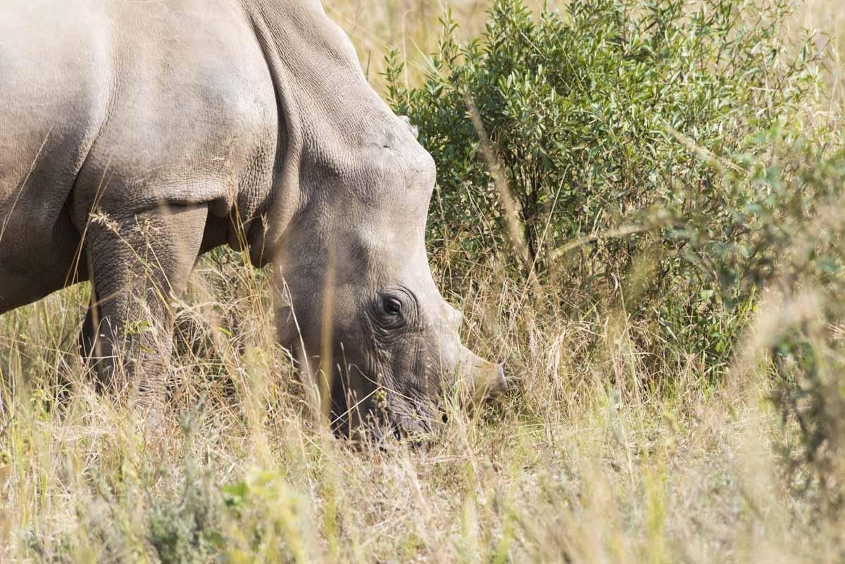 care for wild africa rhino wyntir