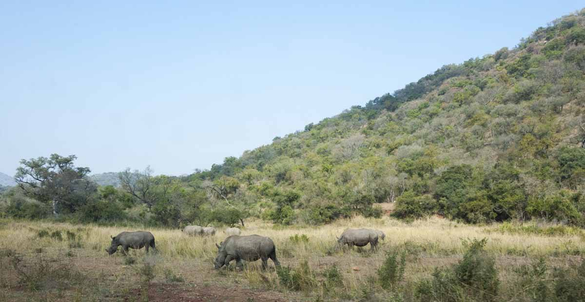 care for wild africa rhinos