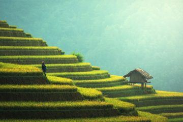 agriculture-china