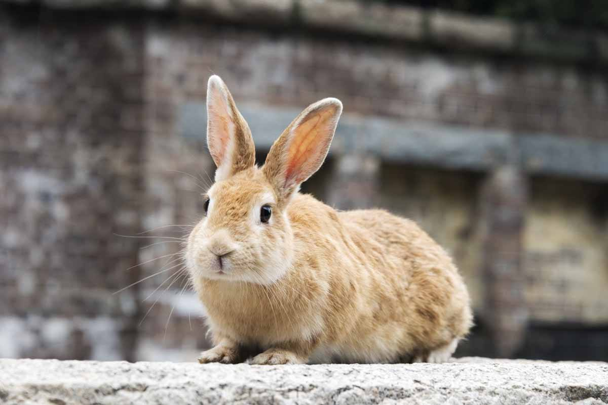 bunny on wall okunoshima japan