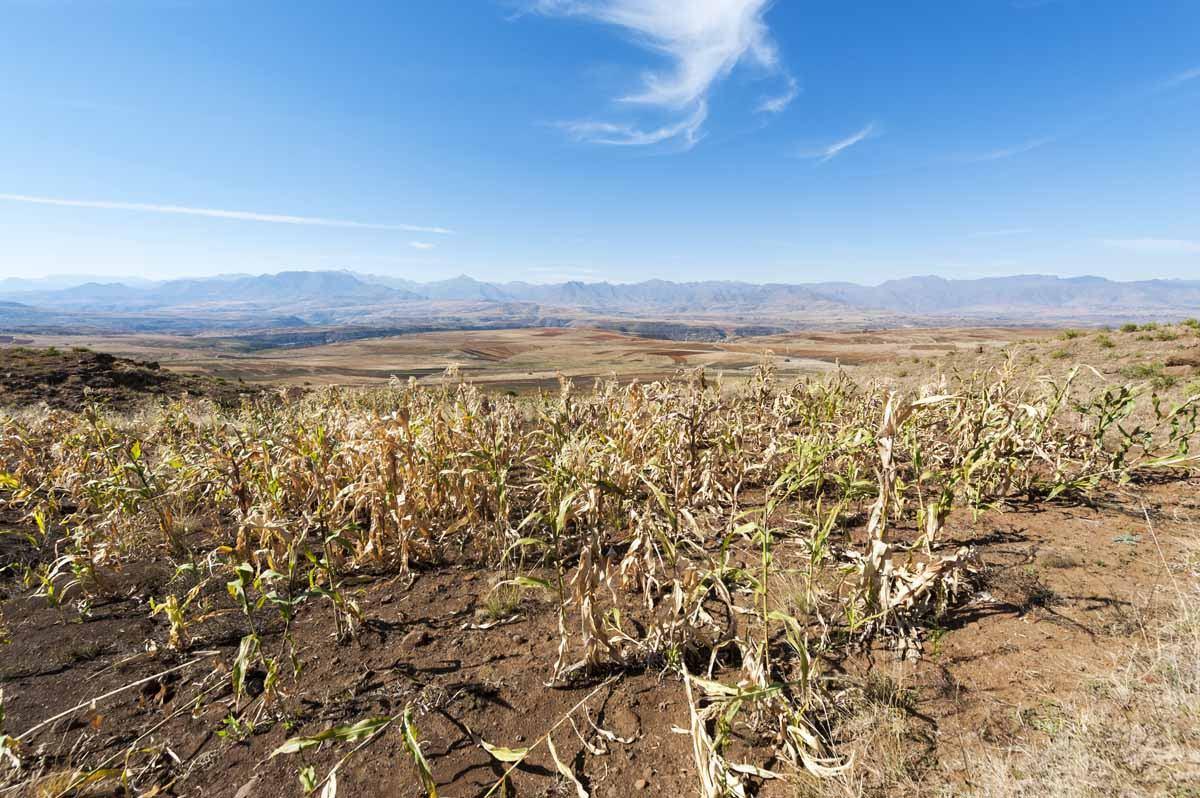 lesotho malealea sorghum fields