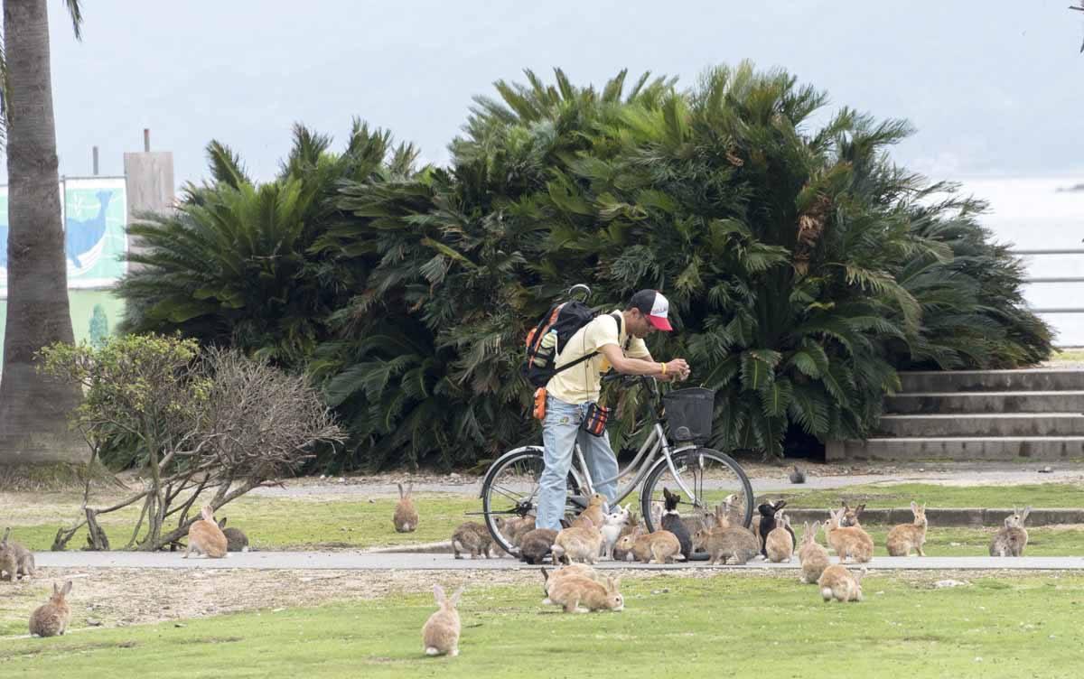 okunishima japan rabbit island feeding