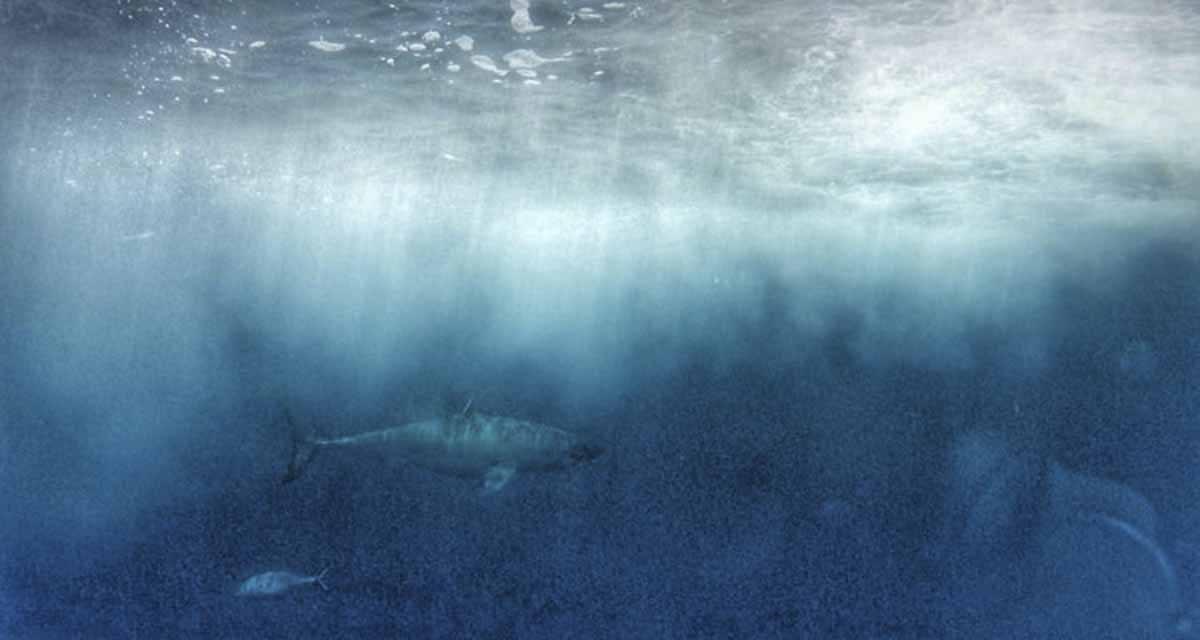 ethical shark diving australia