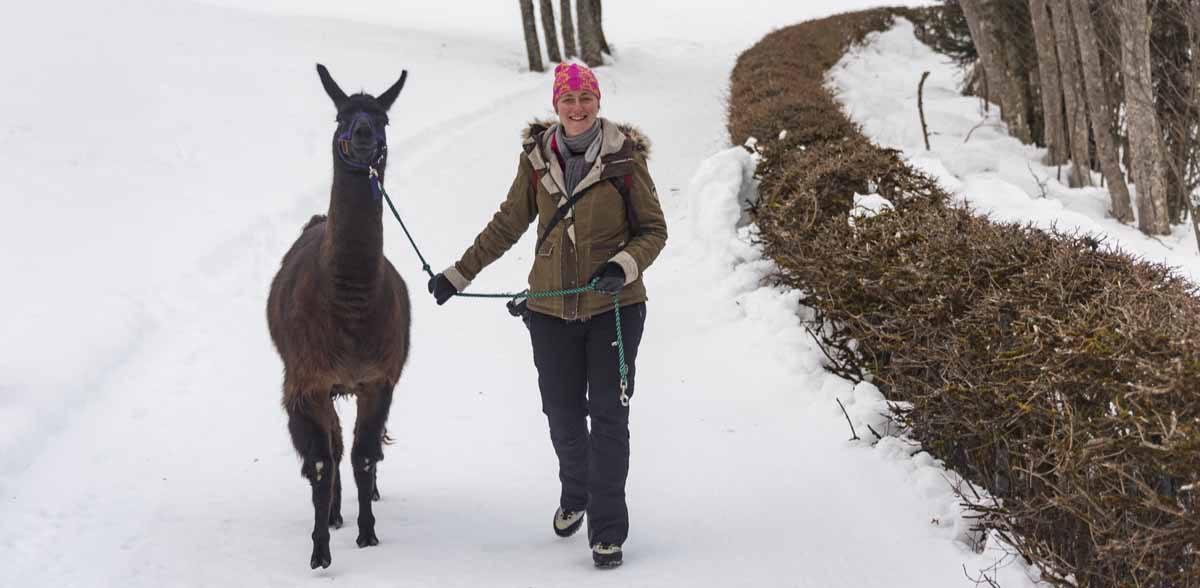 hiking with lama alps austria