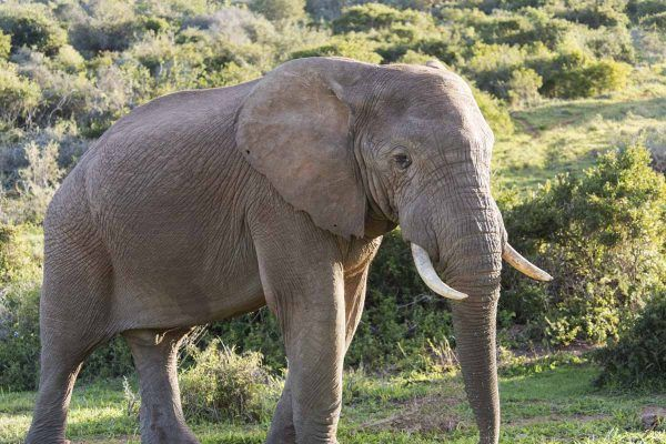 responsible animal activities south africa elephants
