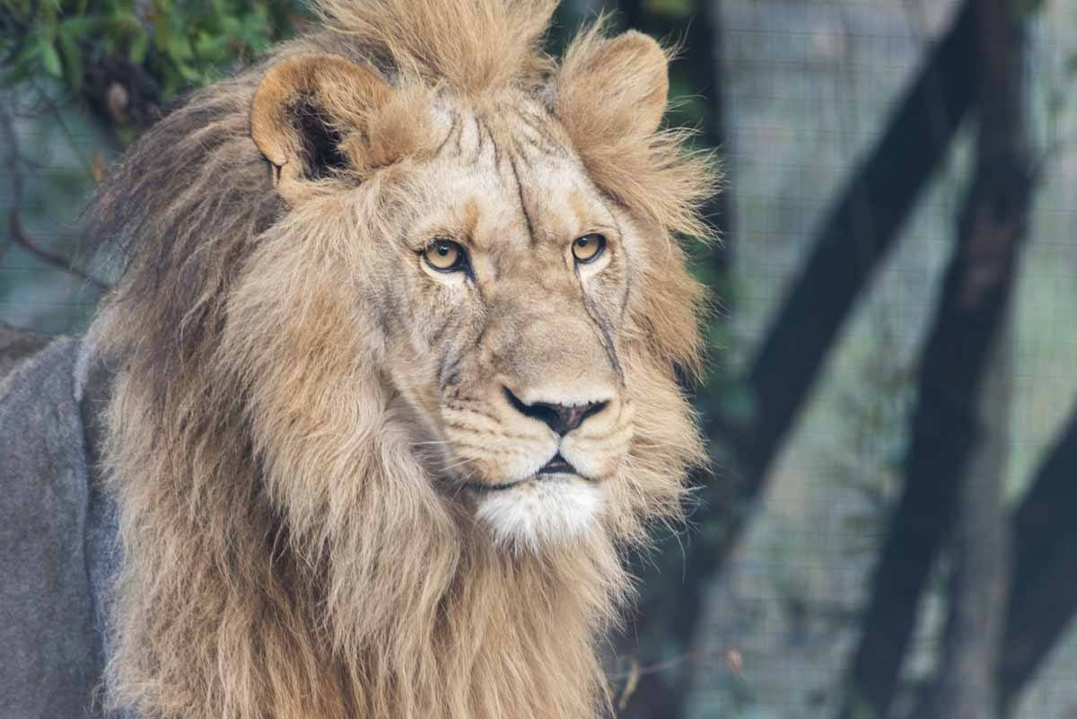 responsible animal activities south africa lions