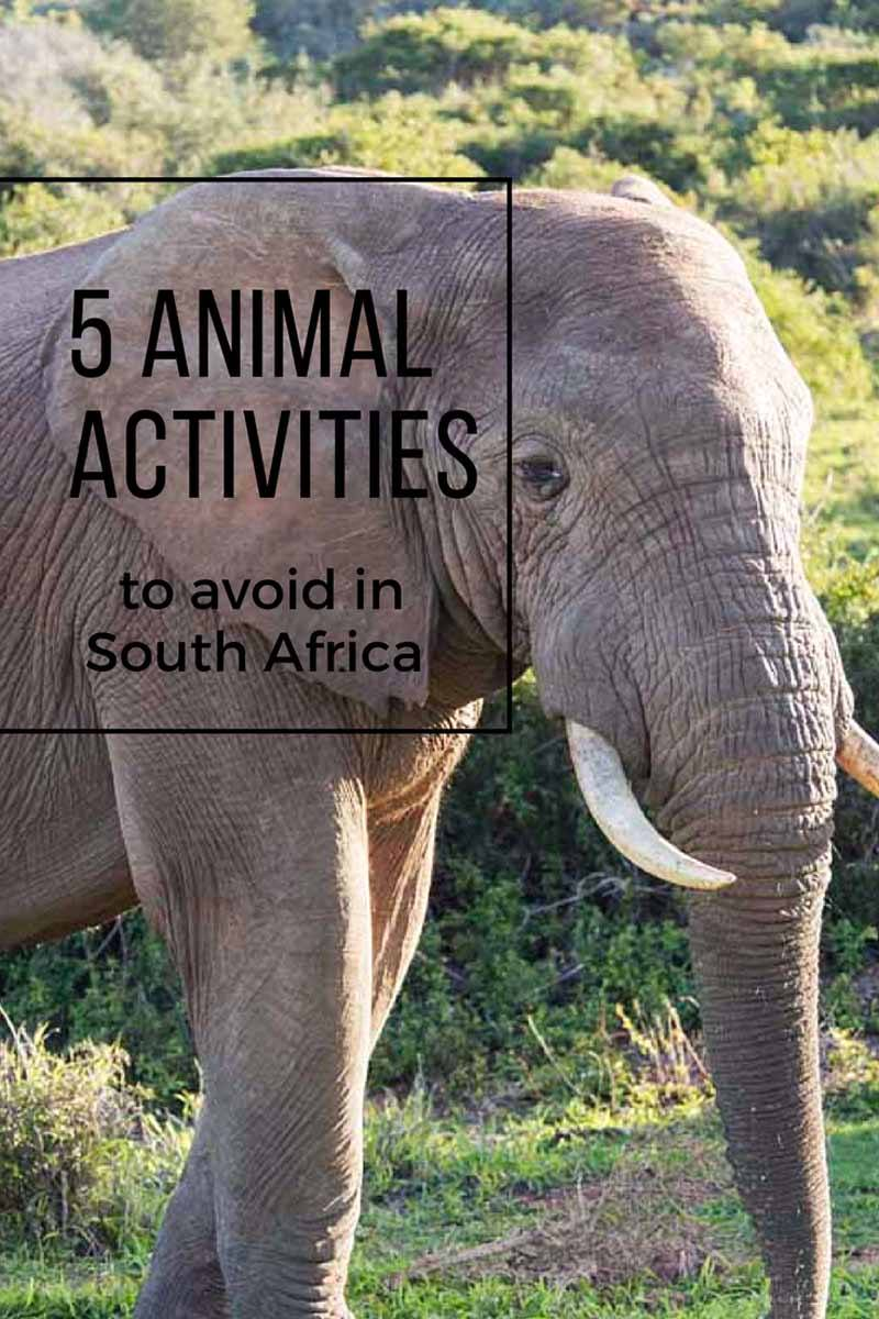 responsible animal activities south africa
