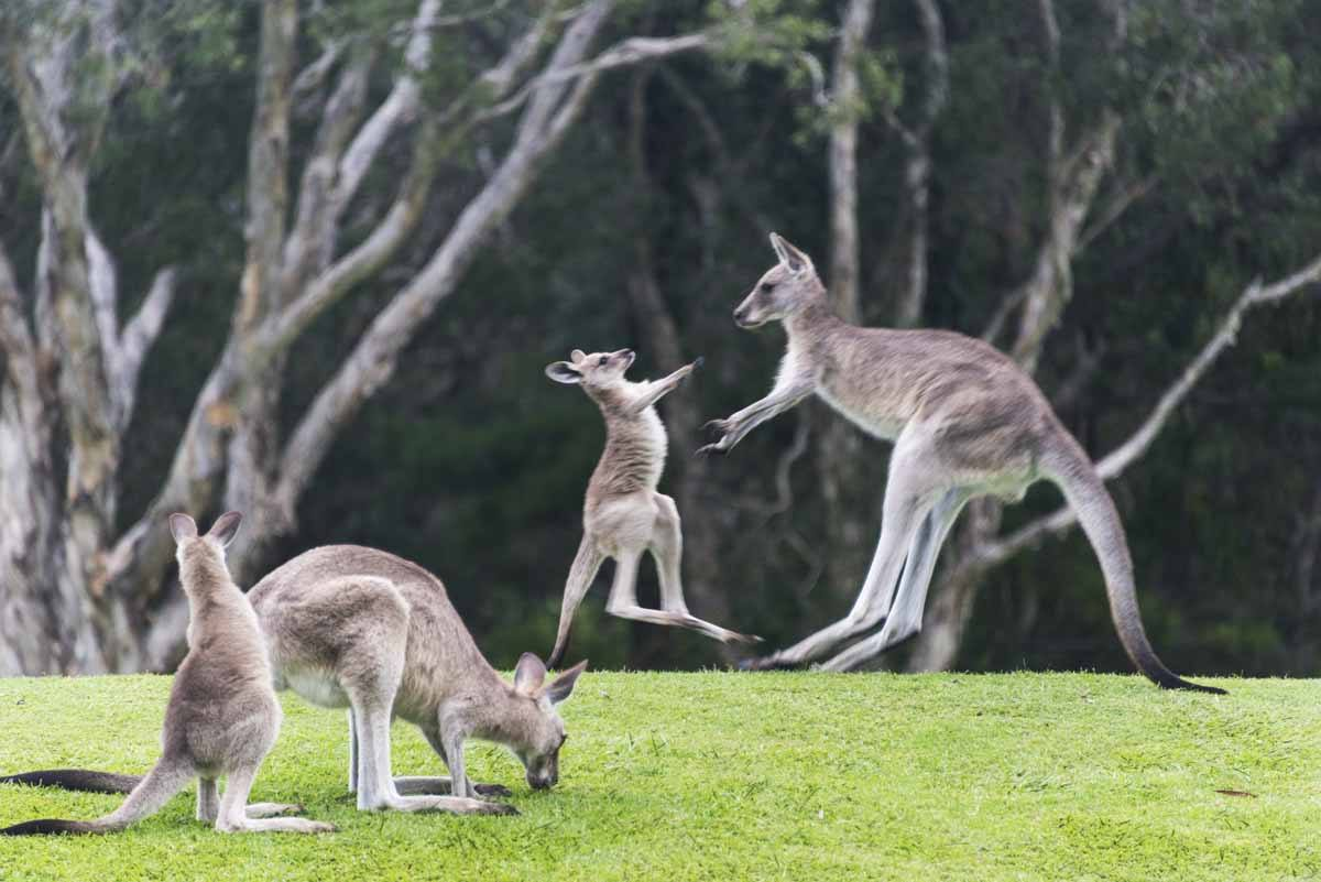 responsible travel australia