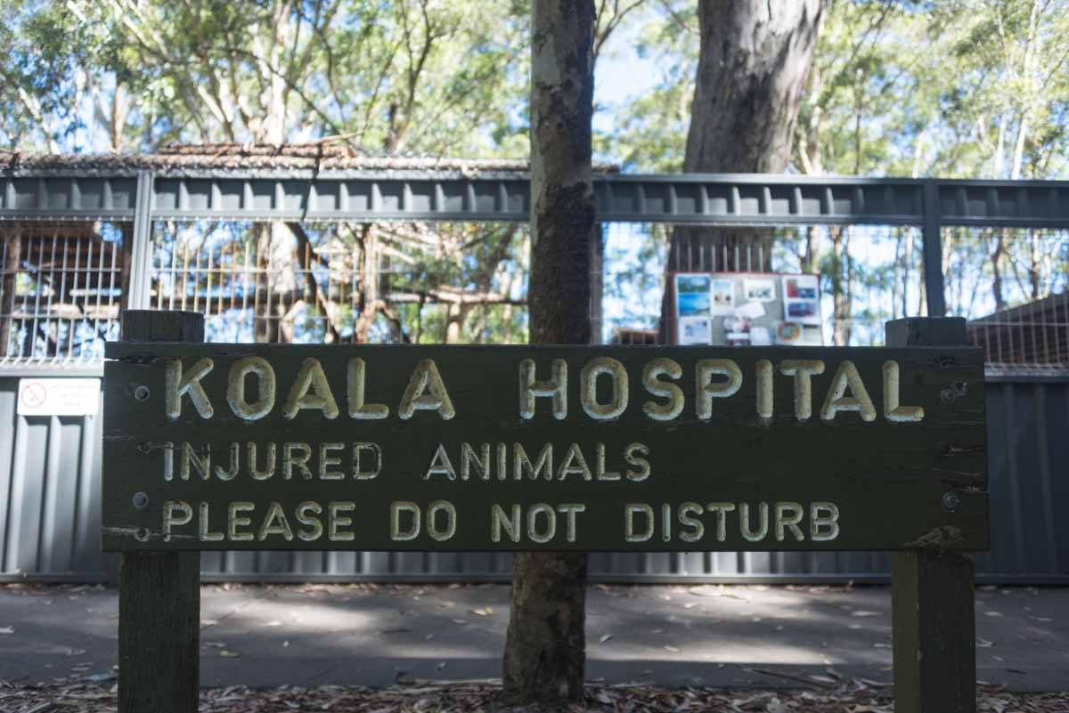 responsible travel australia koala hospital