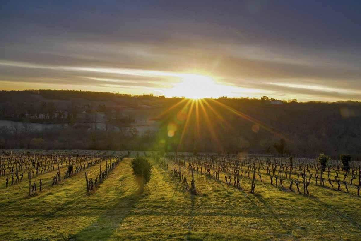chateau feely biodynamic wine